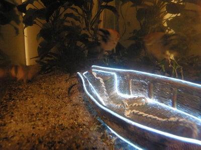 Placing the Boat Inside the Aquarium - Final Step