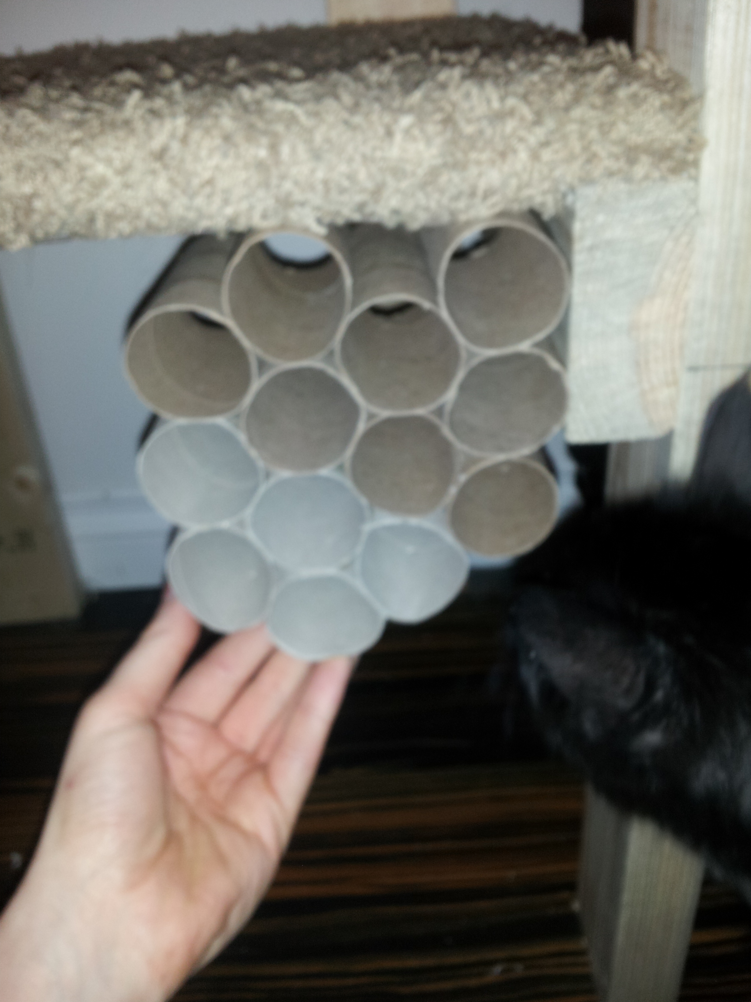 Picture of Curiosity Honeycomb