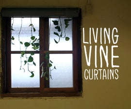 Living Vine Curtains
