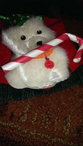Westie Dog Present