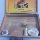Cigar Box Garden/Display Case