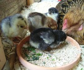 Hatching Chicken Eggs Naturally