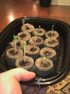 Recycled Plastic: Mini Greenhouse