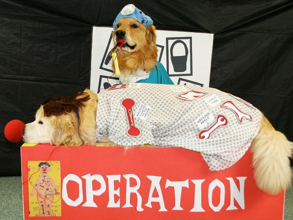Goldens Play the Game of Operation