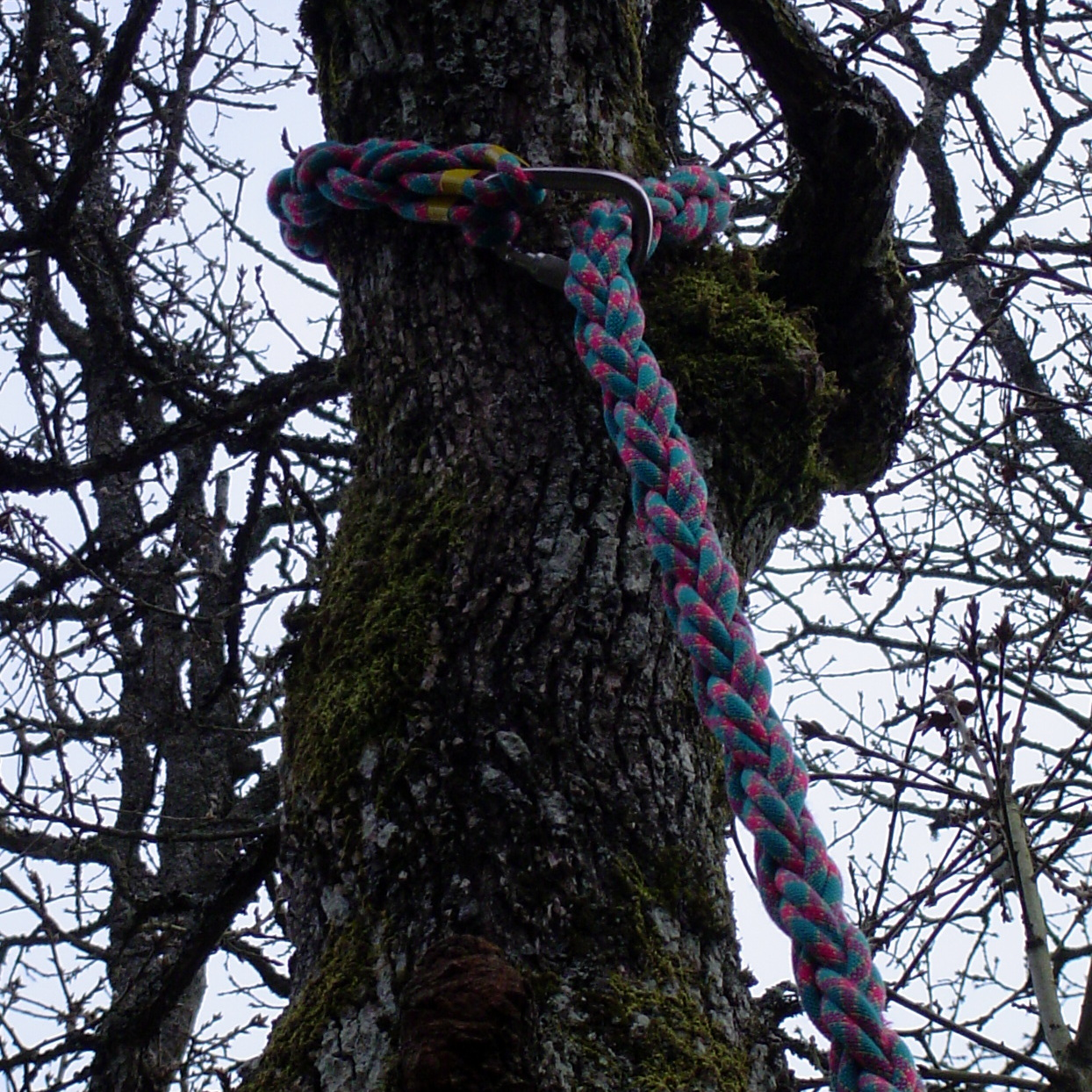 Picture of Attach to a Tree and Get Climbing