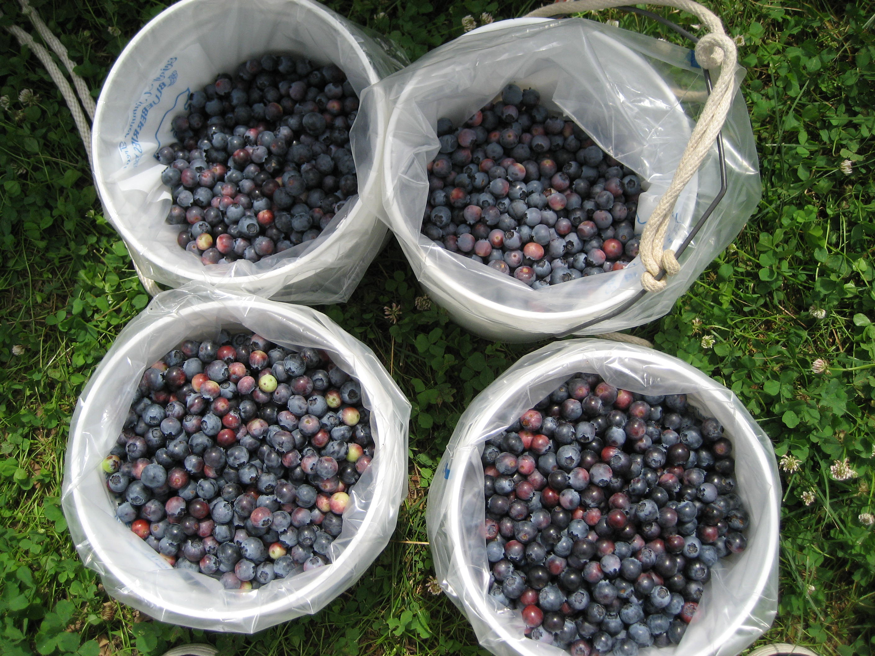 Picture of Pick Your Berries