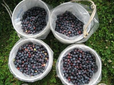 Pick Your Berries
