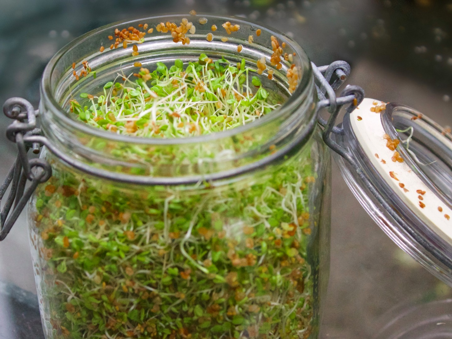 Picture of 36 Cool Indoor Garden Ideas to Grow Food