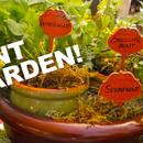 Cocktail Gardening: Grow Herbs Mint, Basil & Cilantro