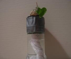 Make a super-easy hydroponics system!