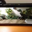 How to Set Up a Reptile Terrarium