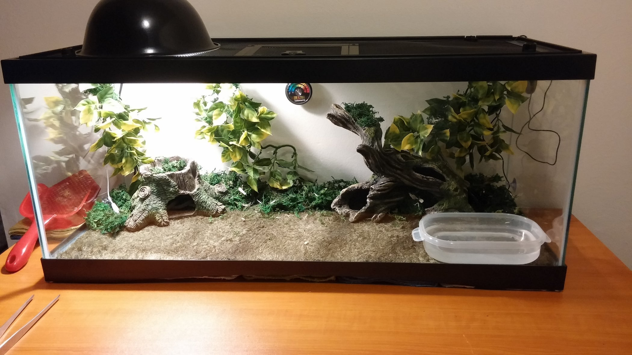 How To Set Up A Reptile Terrarium 8 Steps With Pictures