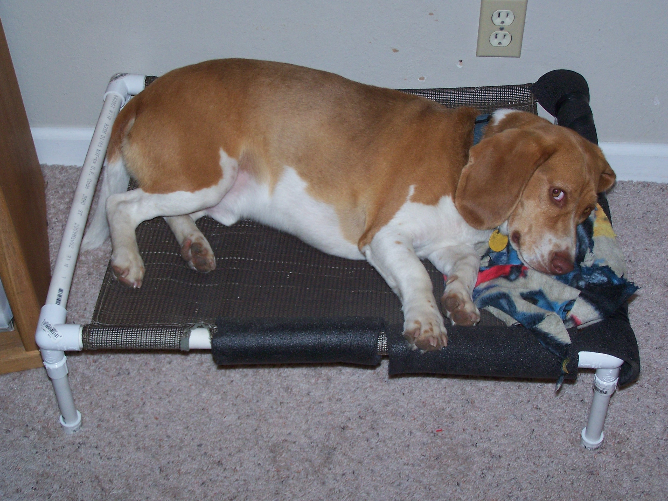 Picture of PVC Elevated Dog Bed