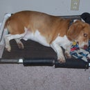PVC Elevated Dog Bed