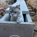 Underground Cat Tunnel