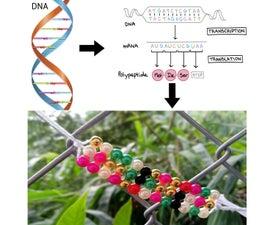 Secret DNA Codon Bracelet