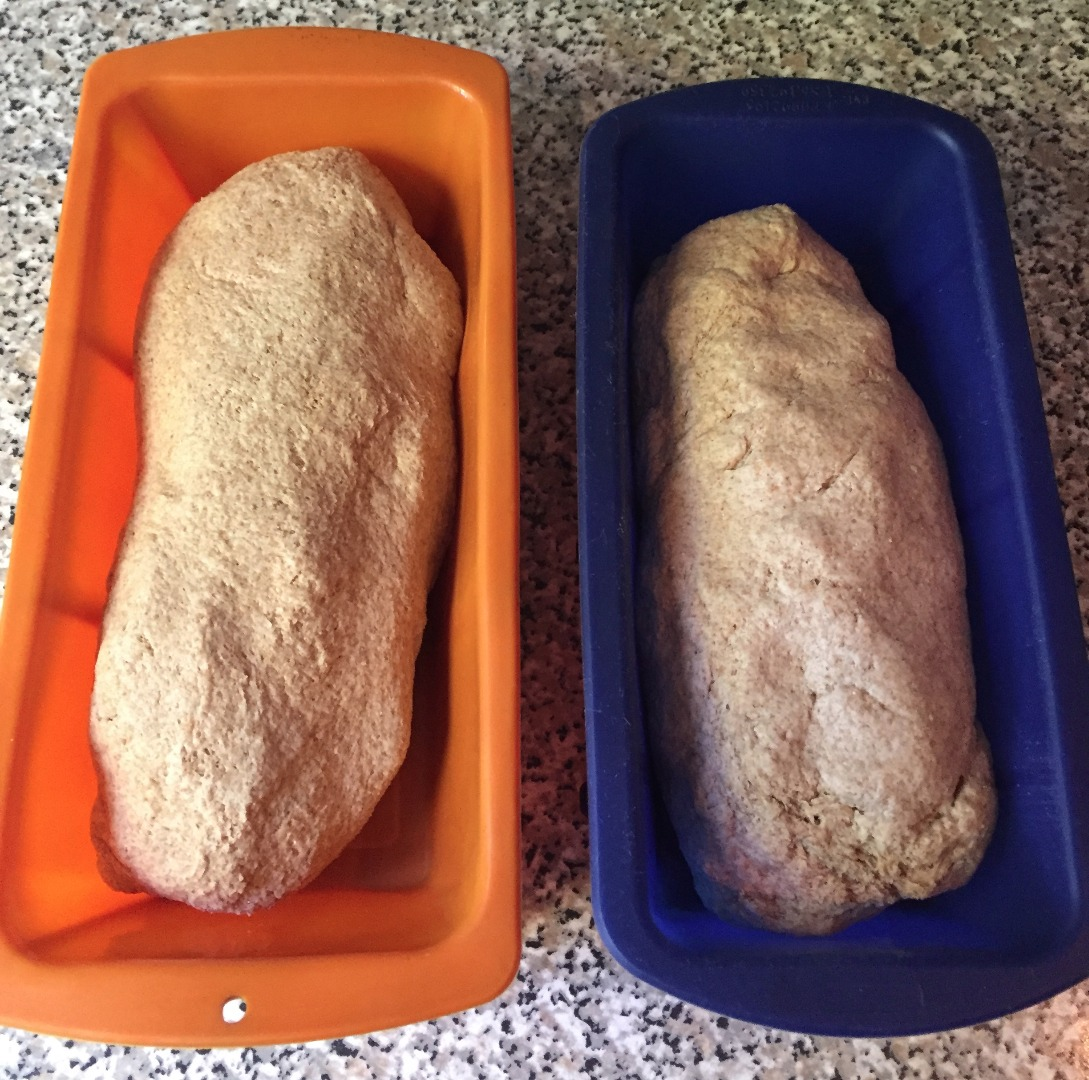 Picture of The Bread Takes Shape