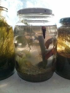 Sealed Ecosystems