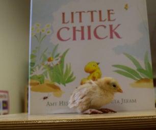 An Egg for a Classroom Pet?