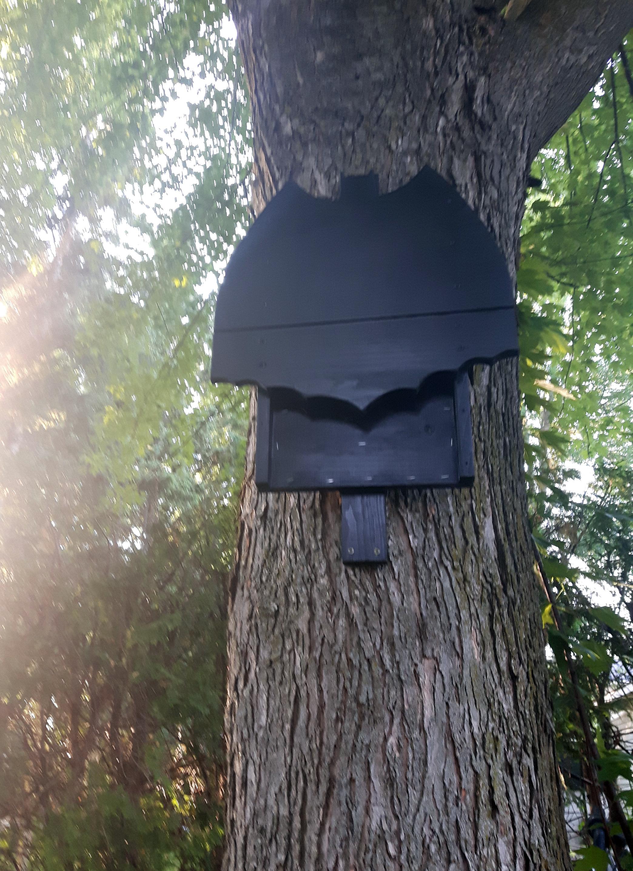 Picture of Batman Logo Bat Box House