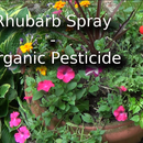 Rhubarb Spray - Organic Pesticide