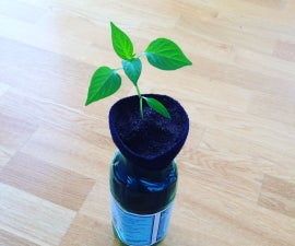 One Cut Self-Watering Planter (using a 2 Litre Bottle)