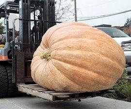 Giant Pumpkins-You Can Grow 'em Too!!