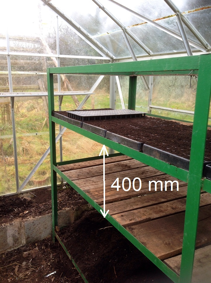 Picture of Leeks - Plant Seeds in Seed Trays