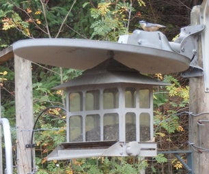 Satellite Dish for the Birds!