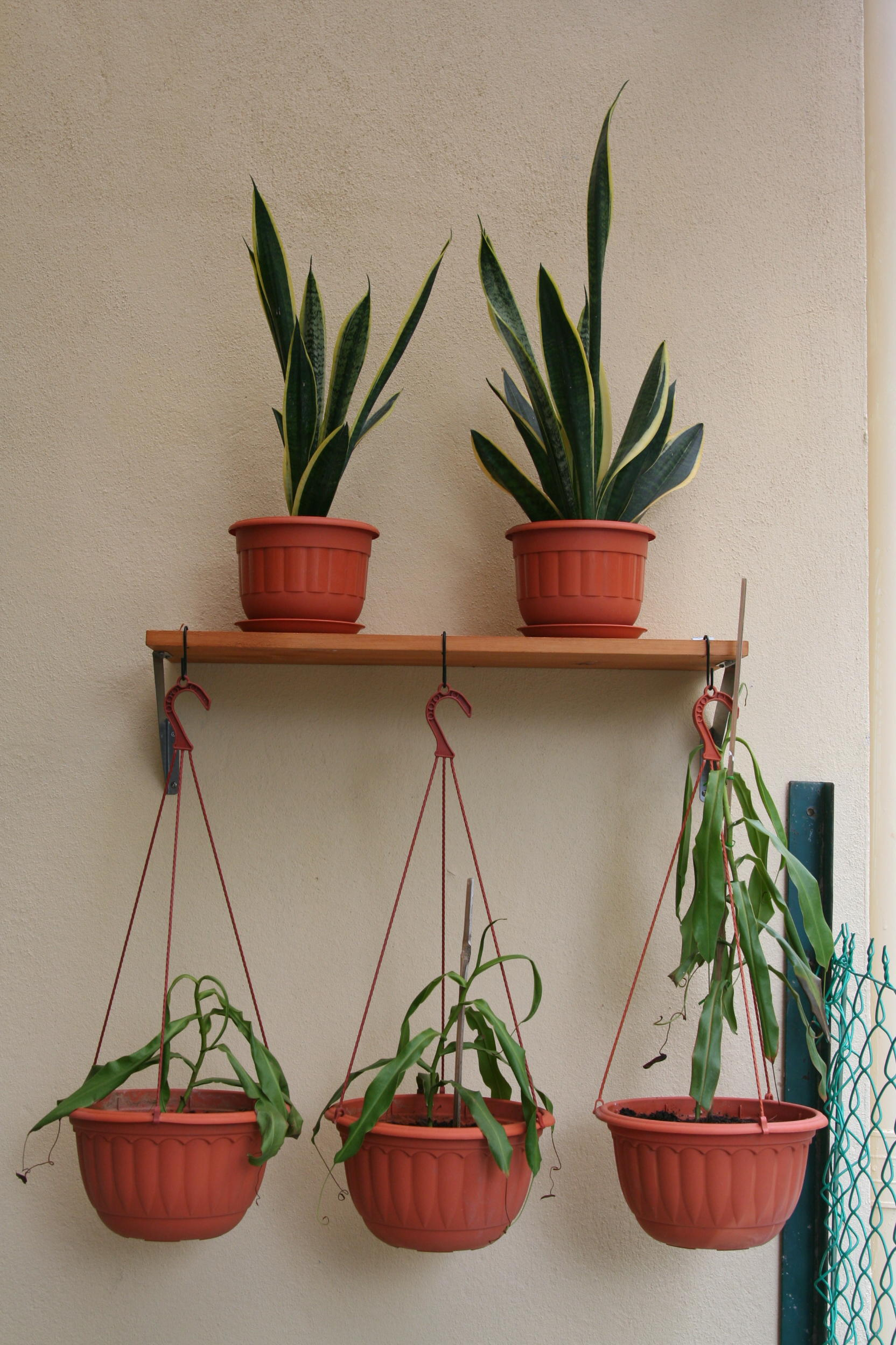 Picture of Hang Your Potted Plants