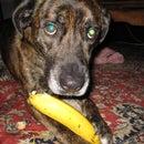 How To Eat A Banana Like A Dog