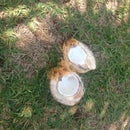 Open a coconut by hand without a machette