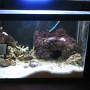 How to setup and build a self contained Saltwater Aquarium with built in Refuge