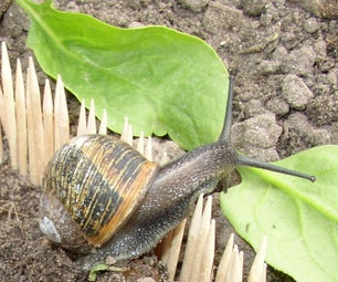 Failed Project: Keeping Snails Away From a Vegetable Garden