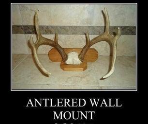 Whitetail Deer Antlered Wall Mount