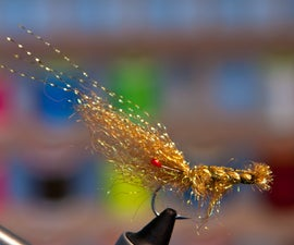 Starburst Brown Shrimp