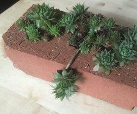 Houseleek Brick