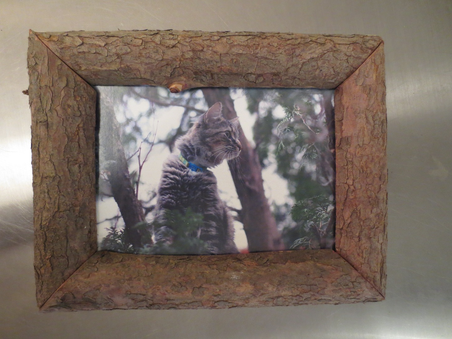 Picture of Assemble Your Nature Frame, Hang on Wall.