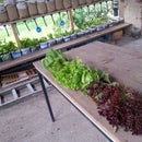 Nook garden - Self watering system (+ april update)