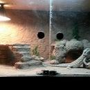 Greg's Enclosure