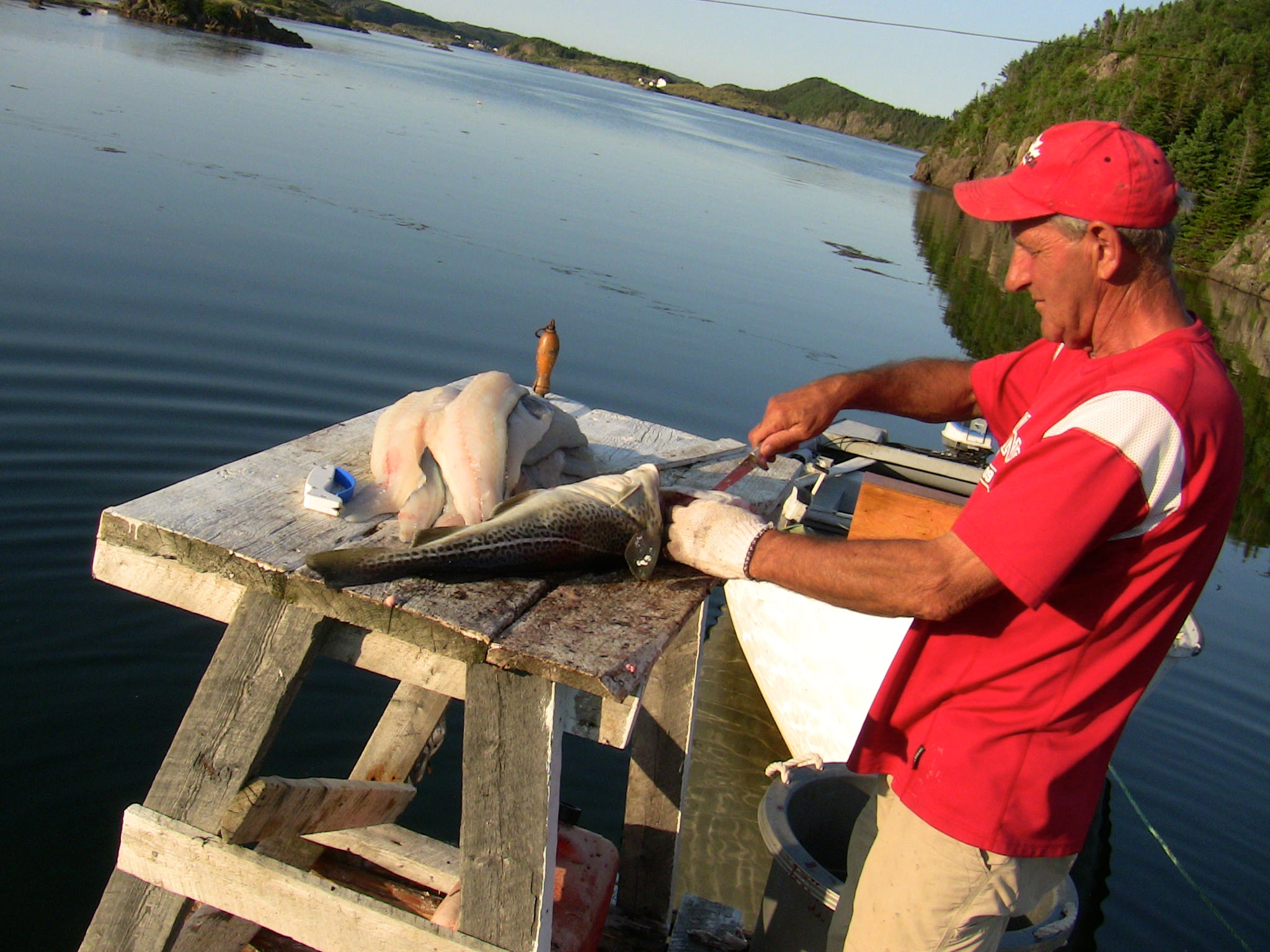 Picture of How to Fillet Codfish Video