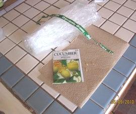 Quick-start Cucumber Plants