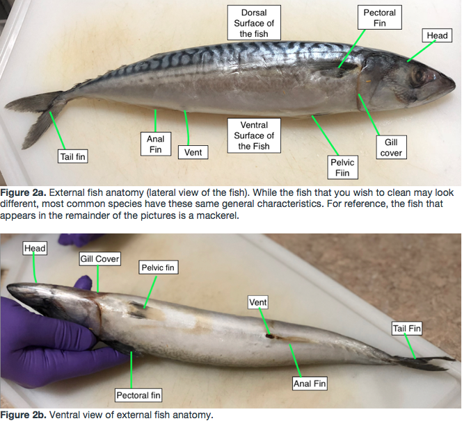 Picture of Familiarize Yourself With the Basics in Fish Anatomy