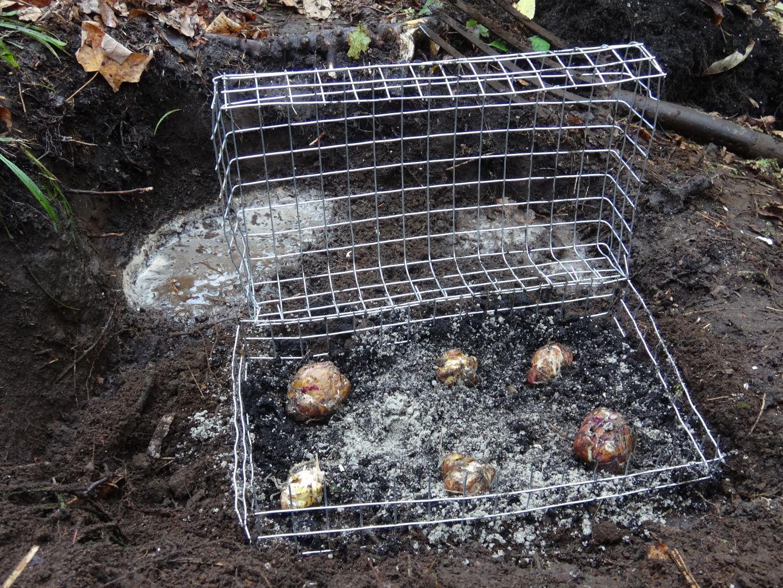 Picture of Gardener's Underground Bulb Cage
