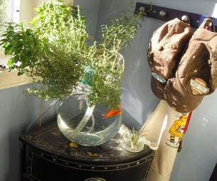 The poor mans aquaponic system