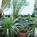 Build a 5 foot Garden Box