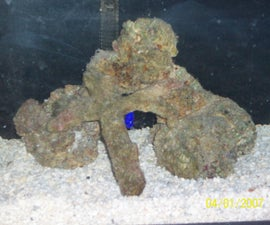 Setting up your first saltwater aquarium