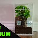 DIY Acrylic Terrarium
