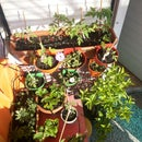 Simple, scalable Raspberry pi garden irrogation