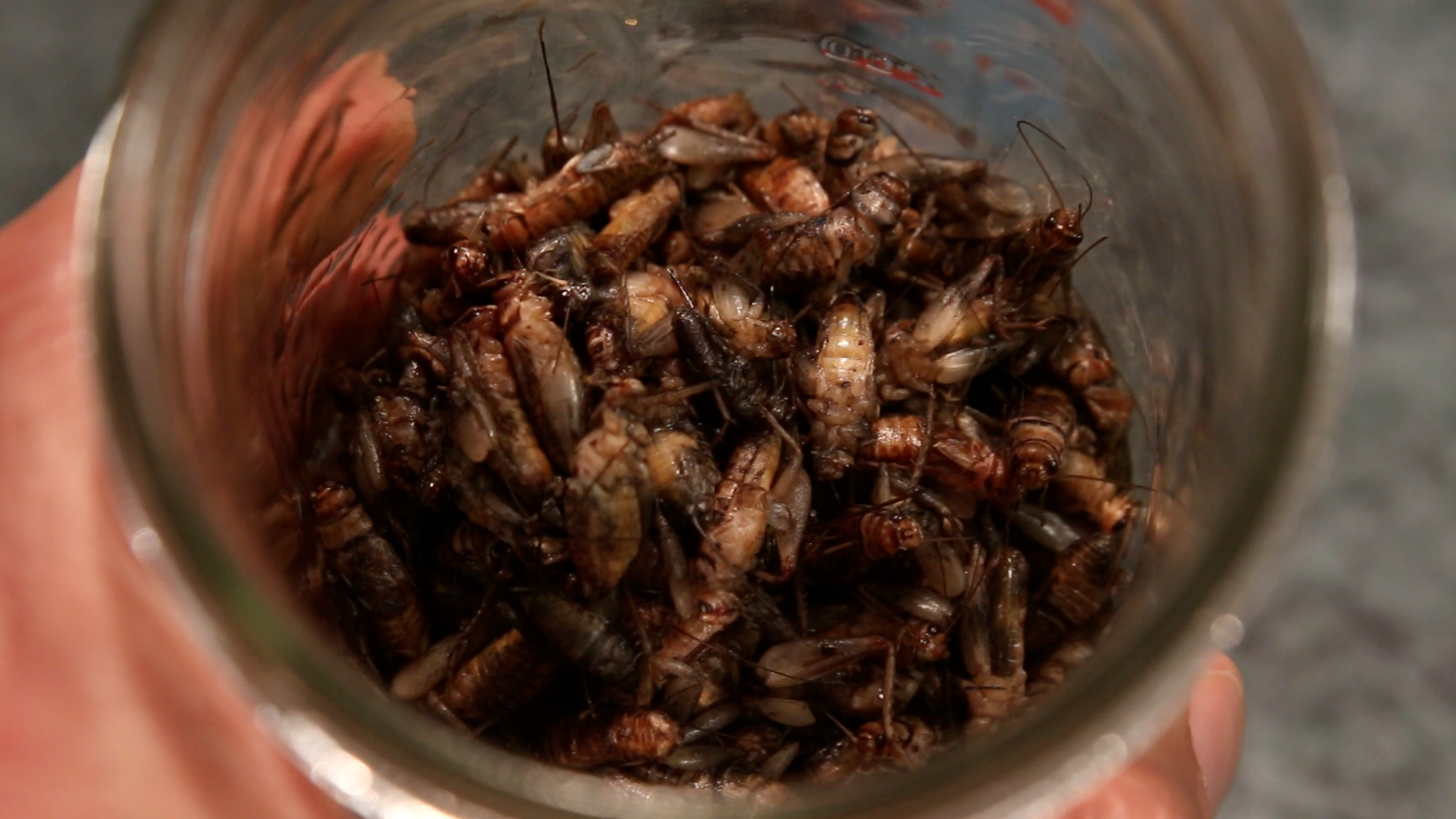 Picture of Cook Your Crickets